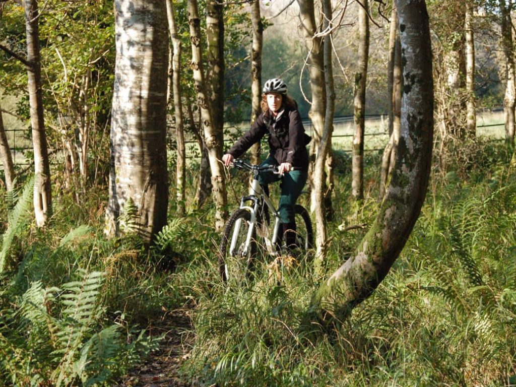 Killarney woods cycle route